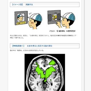 """「褒められる」ことは報酬— 脳の""""喜ぶ""""様子を画像で捕らえた!—生理学研究所の画像"""