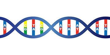 遺伝子(DNA)の2重螺旋のイメージ・イラスト